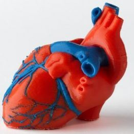 SargentWelch_3DHeart